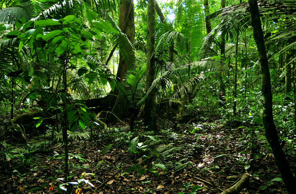 Peugeot Regenwaldprojekt in Brasilien